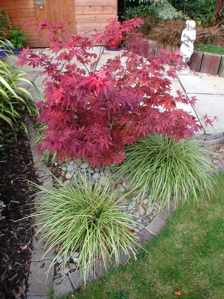 Colourful planting schemes