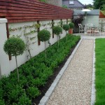 Privet lollipops underplanted with Buxus Buxus