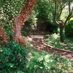 Garden Path in Drumcondra, Dublin