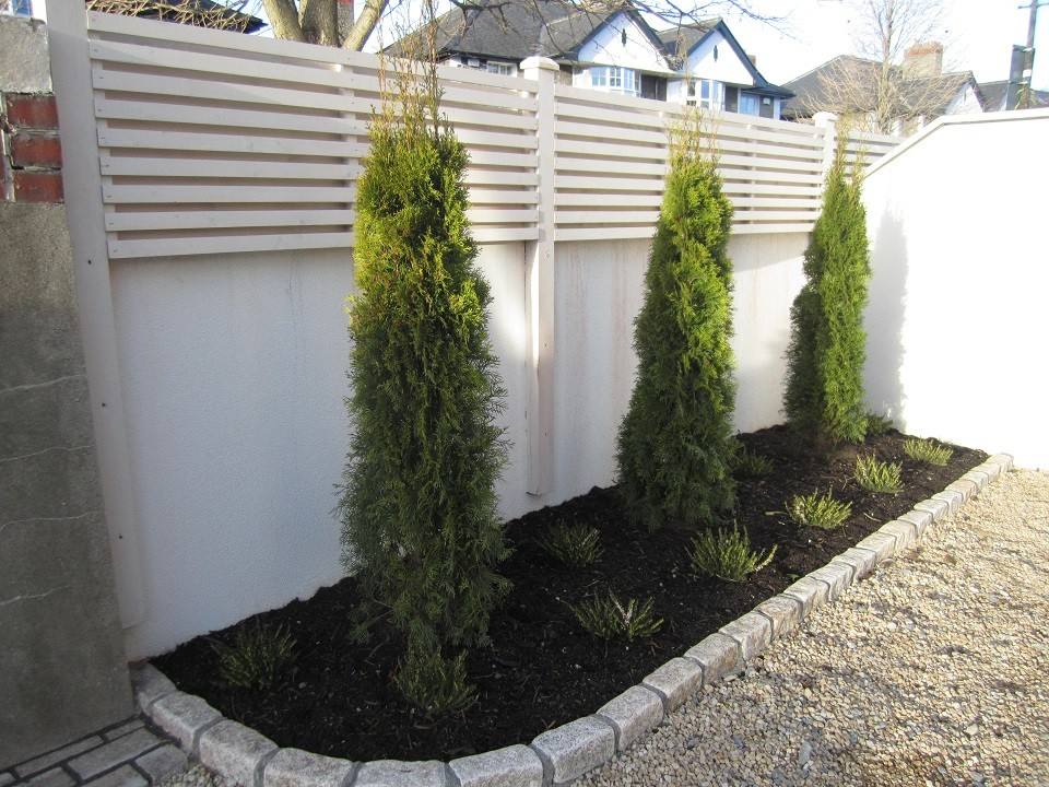 Planting bed with Thuja smargards and heathers