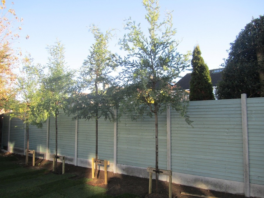 New Fence with instant screening using Mimosa