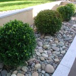 rocks and bushes in a landscaping design