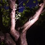 Outdoor Garden Lighting Designs Ireland