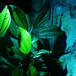 Lighting in a Garden - Landscaping.ie