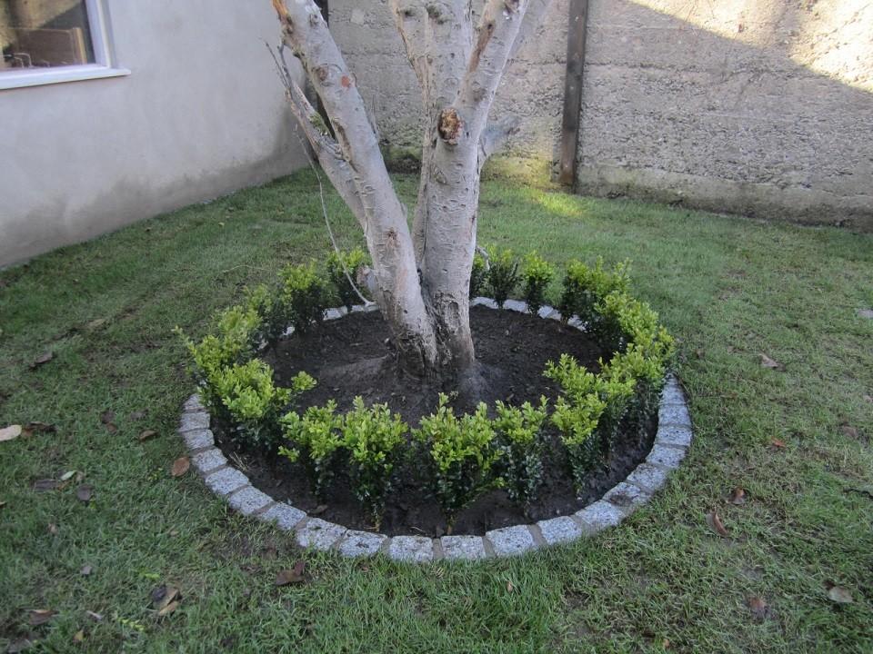 Circle around tree