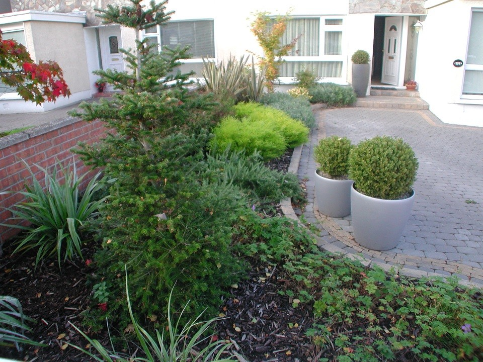 Planters with Buxus balls