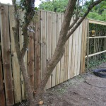 Vertical spruce fencing