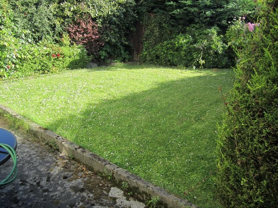 Overgrown back garden